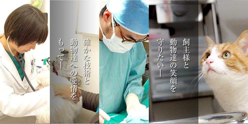 たか なし 動物 病院